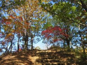 19陣馬山山頂直下の下山道の栃谷尾根の紅葉
